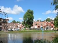 Ulmus hollandica Belgica iepziekte (groningen nieuwe ebbingestraat) 040523
