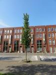 Ulmus Columella (amsterdam ijburg) 140518