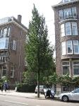 Ulmus Columella (amsterdam koninginneweg) 040702