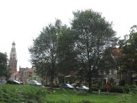 Ulmus Dodoens (enkhuizen wilhelminaplantsoen) 090726