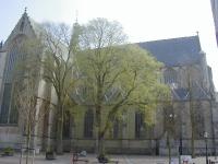 Ulmus hollandica Belgica (alkmaar kerkplein) 020421