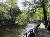 Ulmus hollandica Belgica (amsterdam herengracht) 130707