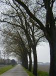 Ulmus hollandica Belgica (anna paulowna veerweg) 020421