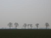 Ulmus hollandica Belgica (groningerland) 070331