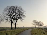 Ulmus hollandica Belgica (lewedorp postweg) 120127