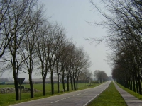 Ulmus hollandica Commelin (schagen N241 hoek N248) 020421