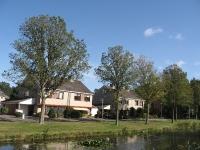 Ulmus hollandica Groeneveld (alkmaar offenbachstraat) 090923