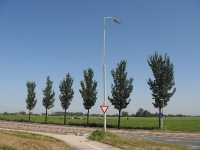 Ulmus Lobel (saaksum barnwerderweg) 060911