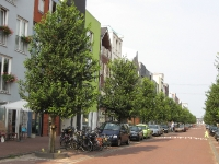 Ulmus New Horizon (amsterdam vaillantlaan) 100814c