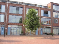 Ulmus New Horizon (amsterdam vaillantlaan) 100814d