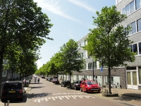 Ulmus New Horizon (amsterdam vaillantlaan) 140518c