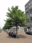 Ulmus New Horizon (amsterdam westerdok) 140609g
