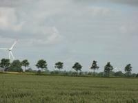 Ulmus New Horizon (B203 wöhrden nixdorf) 140730e