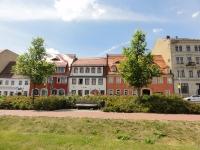 Ulmus New Horizon (Meissen Uferstrasse) 120607h