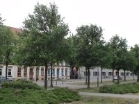 Ulmus New Horizon (Wismar Ulmenstrasse) 120604b