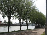 Ulmus Plantijn (amsterdam buiksloterweg) 090630