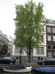 Ulmus Plantijn (amsterdam reguliersgracht) 070811
