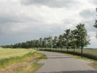 Ulmus Rebona (Lassentin Duvendiek - Feldweg nrd) 120604