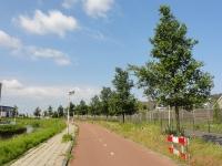 Ulmus Rebona (naaldwijk kruisbroekweg) 090601
