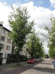 Ulmus Regal (Berlin Elfriede Kuhr Strasse) 120605