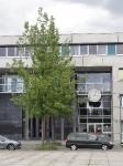 Ulmus Regal (Berlin Liselotte Berger Platz) 120605