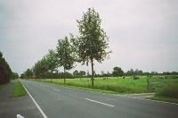 Ulmus Regal (diekmannshausen B437 jadebusen) juni 2005