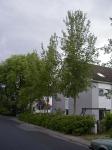 Ulmus Regal (griesheim ulmenweg) 010618