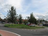 Ulmus Regal (zwartsluis havendijk) 090813