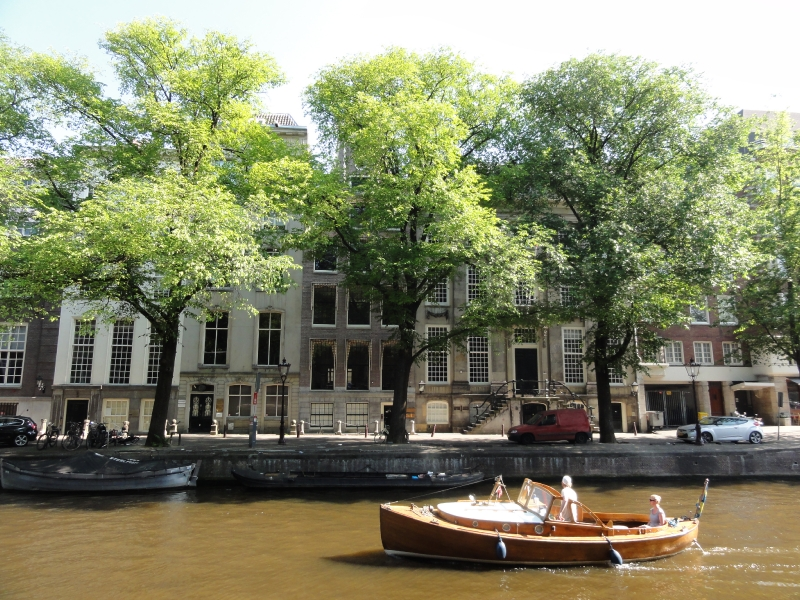 Ulmus hollandica Belgica (amsterdam herengracht) 130707