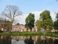 Ulmus hollandica Belgica iepziekte (groningen nieuwe ebbingestraat) 020708
