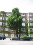 Ulmus Clusius (amsterdam hobbemakade) 070619
