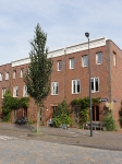 Ulmus Columella (amsterdam ijburg) 131002