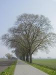 Ulmus hollandica Belgica (anna paulowna kruisweg) 020421