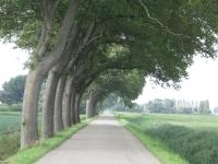 Ulmus hollandica Belgica (anna paulowna veerweg) 070623