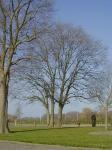 Ulmus hollandica Belgica (enkhuizen westeinde 60) 020407