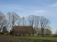 Ulmus hollandica Belgica (ravenswoud lycklamavaart) 070404