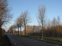 Ulmus hollandica Commelin (li) & Lobel (re) (middelstum delleweg) 100101