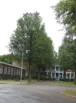 Ulmus hollandica Groeneveld (den haag heeswijkplein) 090901