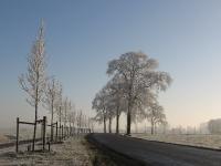 Ulmus New Horizon & hollandica Belgica (N983 aduard den ham) 071222