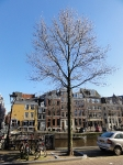 Ulmus New Horizon (amsterdam herengracht 358-394) 140203d