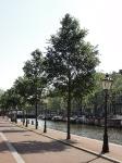Ulmus New Horizon (amsterdam nieuwe keizersgracht) 130707n