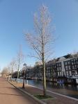 Ulmus New Horizon (amsterdam nieuwe keizersgracht) 140203f