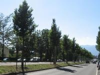 Ulmus New Horizon (Geneve Route de Meyrin) 100707
