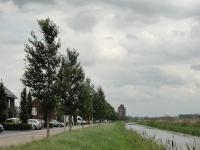 Ulmus New Horizon (zwolle paaslostraat) 130730e