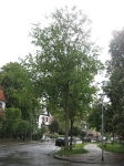 Ulmus Regal (darmstadt ohlystrasse) 100518
